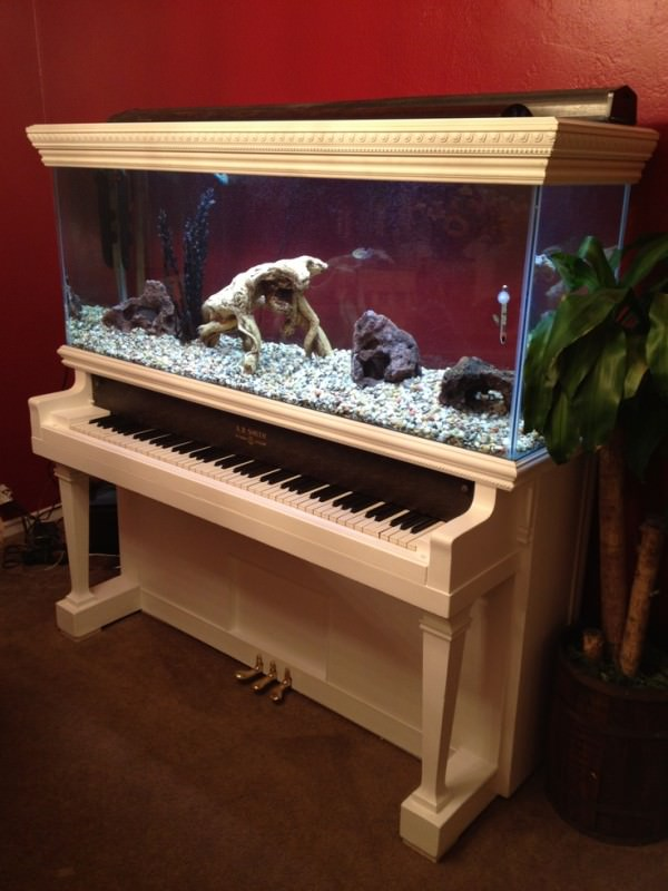AD-Amazing-Aquariums-12