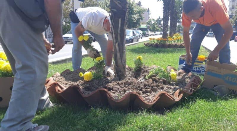 Акција за летно хортикултурно уредување низ Општина Струмица
